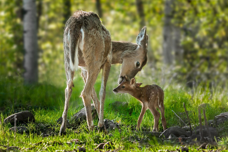 Wohnen am Klingertal Meissen - Wald Natur Rehe Rotwild Wild Kitz Reh