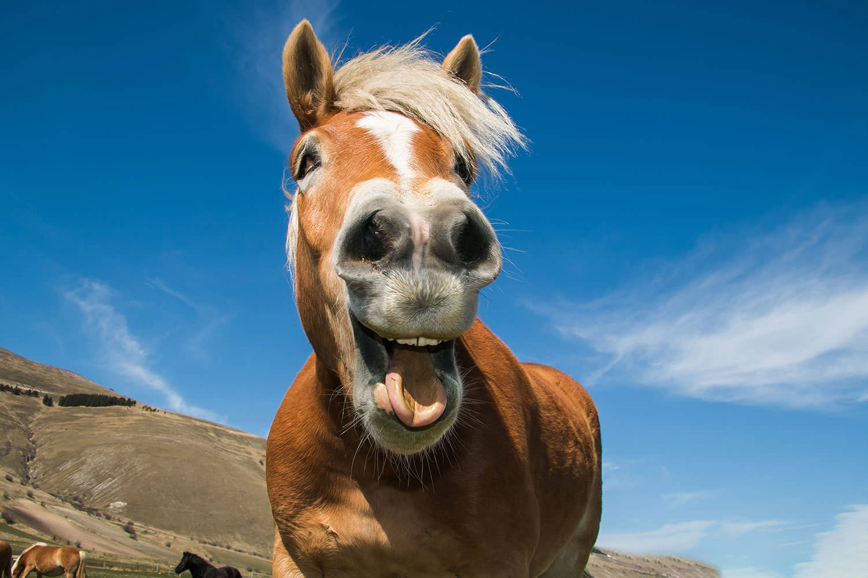 Wohnen am Klingertal Meissen - Pferd Gaul lustig erleben spaß